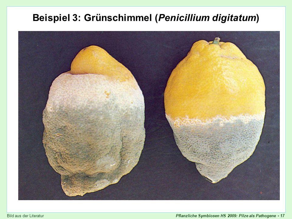 Pflanzliche Symbiosen HS 2009: Pilze als Pathogene - 17 Penicillium digitatum Beispiel 3: Grünschimmel (Penicillium digitatum) Bild aus der Literatur