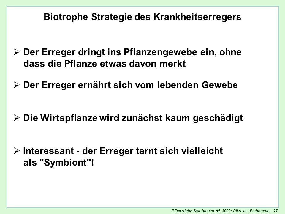 Pflanzliche Symbiosen HS 2009: Pilze als Pathogene - 27 Biotrophie Biotrophe Strategie des Krankheitserregers Der Erreger dringt ins Pflanzengewebe ei