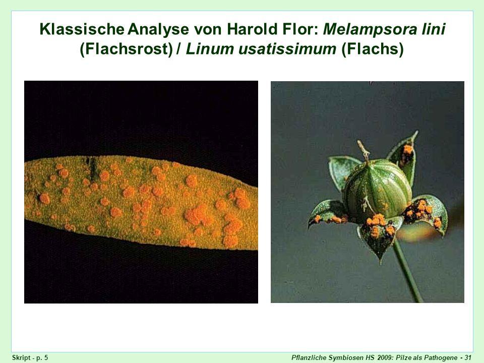 Pflanzliche Symbiosen HS 2009: Pilze als Pathogene - 31 Klassische Analyse von Harold Flor: Melampsora lini (Flachsrost) / Linum usatissimum (Flachs)