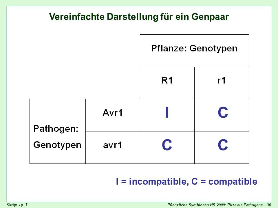 Pflanzliche Symbiosen HS 2009: Pilze als Pathogene - 36 Vereinfachte Darstellung für ein Genpaar Vereinfachte Darstellung: ein Genpaar I = incompatibl
