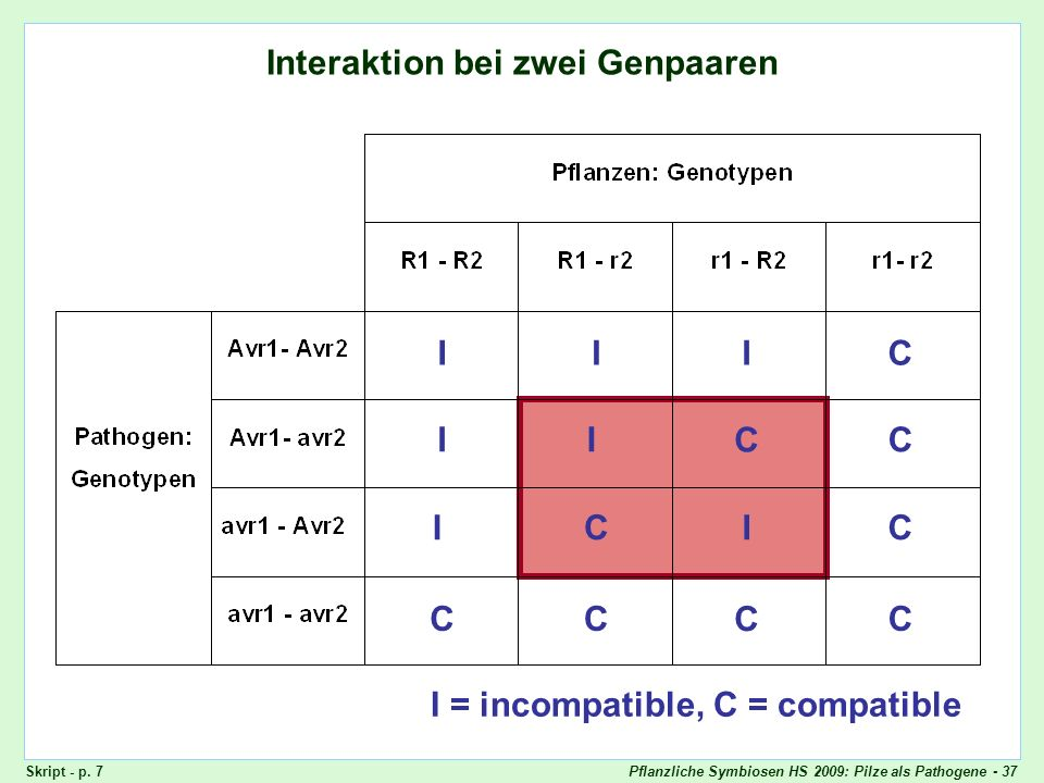 Pflanzliche Symbiosen HS 2009: Pilze als Pathogene - 37 Interaktion bei zwei Genpaaren I = incompatible, C = compatible IIIC II C C I CC I CCC C Skrip