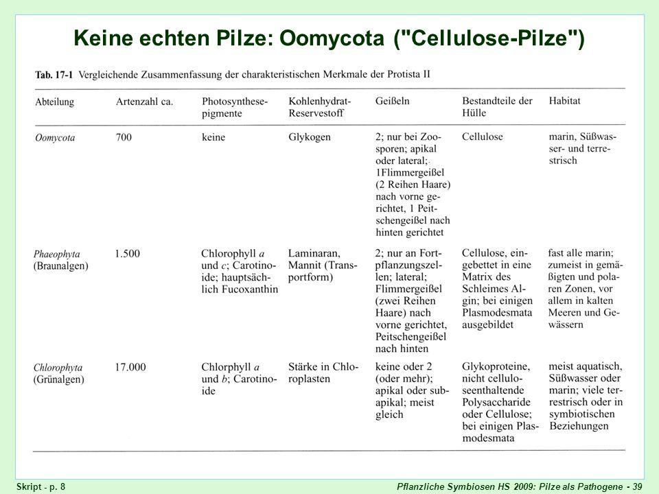 Pflanzliche Symbiosen HS 2009: Pilze als Pathogene - 39 Keine echten Pilze: Oomycota (