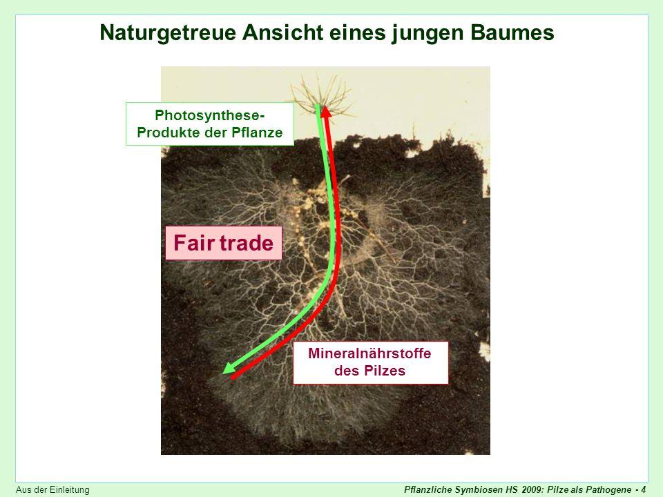 Pflanzliche Symbiosen HS 2009: Pilze als Pathogene - 55 Ascomyceten: Konidien Asexuelle Vermehrung: Konidien Skript - p.