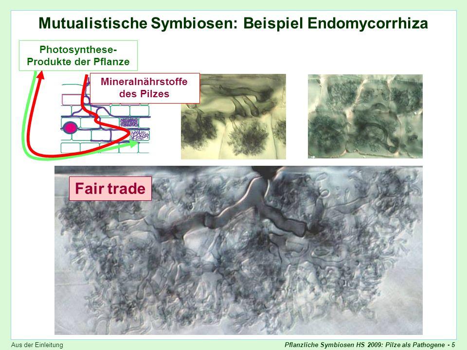 Pflanzliche Symbiosen HS 2009: Pilze als Pathogene - 5 Endomykorrhiza Mutualistische Symbiosen: Beispiel Endomycorrhiza Photosynthese- Produkte der Pf