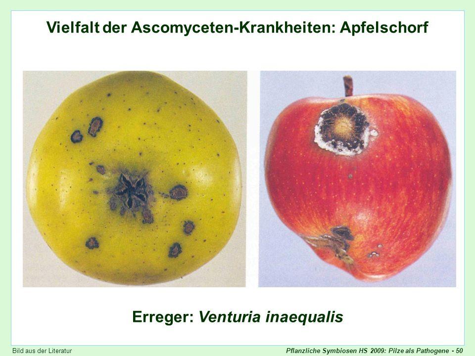 Pflanzliche Symbiosen HS 2009: Pilze als Pathogene - 50 Vielfalt der Ascomyceten-Krankheiten: Venturia (1) Vielfalt der Ascomyceten-Krankheiten: Apfel