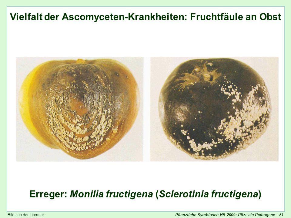 Pflanzliche Symbiosen HS 2009: Pilze als Pathogene - 51 Vielfalt der Ascomyceten-Krankheiten: Monilia (2) Vielfalt der Ascomyceten-Krankheiten: Frucht