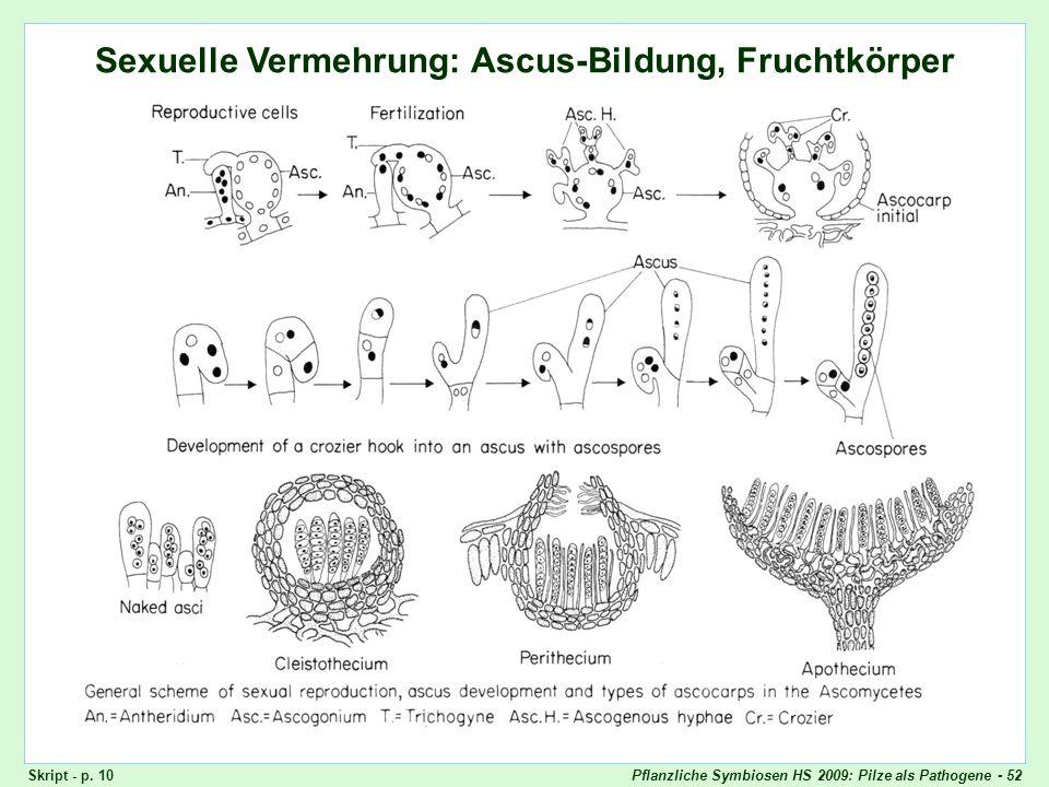 Pflanzliche Symbiosen HS 2009: Pilze als Pathogene - 52 Ascomyceten: Sexuelle Fortpflanzung Sexuelle Vermehrung: Ascus-Bildung, Fruchtkörper Skript -