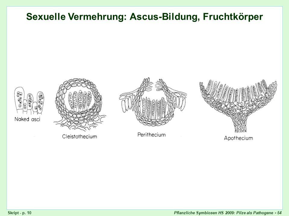 Pflanzliche Symbiosen HS 2009: Pilze als Pathogene - 54 Ascomyceten: Fruchtkörper Sexuelle Vermehrung: Ascus-Bildung, Fruchtkörper Skript - p. 10