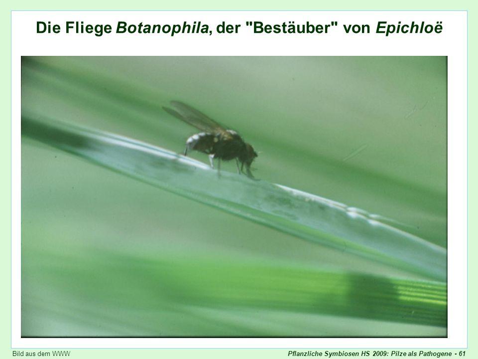 Pflanzliche Symbiosen HS 2009: Pilze als Pathogene - 61 Botanophila Die Fliege Botanophila, der