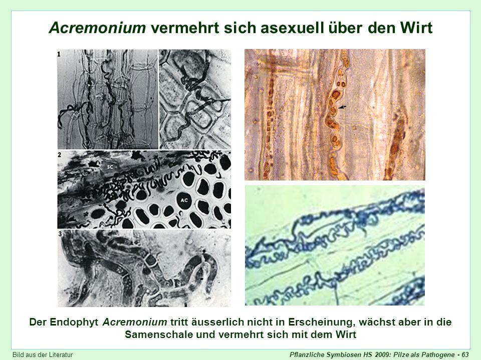 Pflanzliche Symbiosen HS 2009: Pilze als Pathogene - 63 Acremonium wächst in die Samen Acremonium vermehrt sich asexuell über den Wirt Der Endophyt Ac