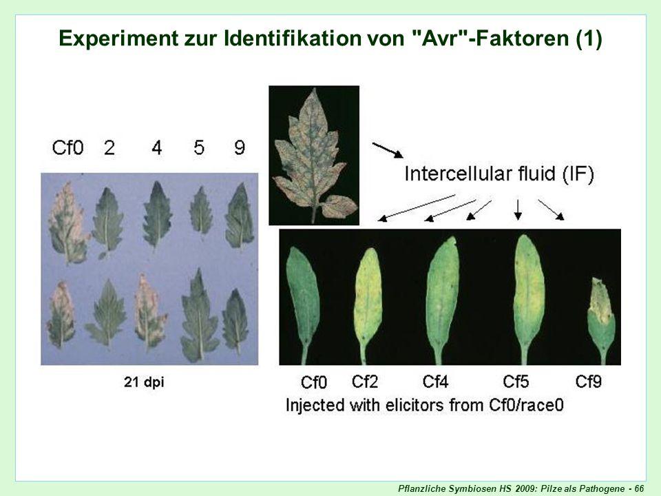 Pflanzliche Symbiosen HS 2009: Pilze als Pathogene - 66 Experiment zur Identifikation von Avr-Faktoren (1) Experiment zur Identifikation von