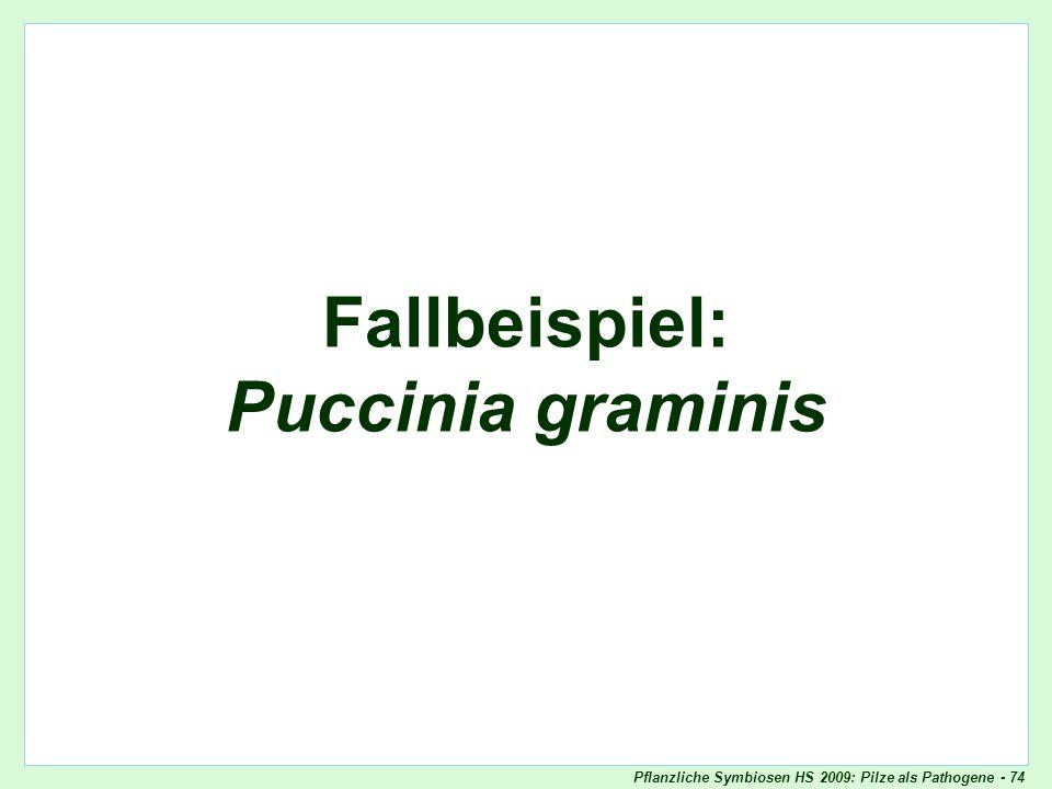 Pflanzliche Symbiosen HS 2009: Pilze als Pathogene - 74 Fallbeispiel: Puccinia graminis Oomyceten als Pathogene