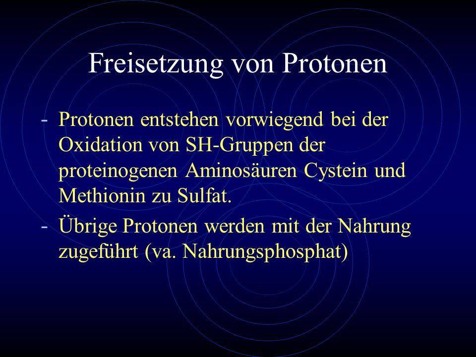 Freisetzung von Protonen - Protonen entstehen vorwiegend bei der Oxidation von SH-Gruppen der proteinogenen Aminosäuren Cystein und Methionin zu Sulfa