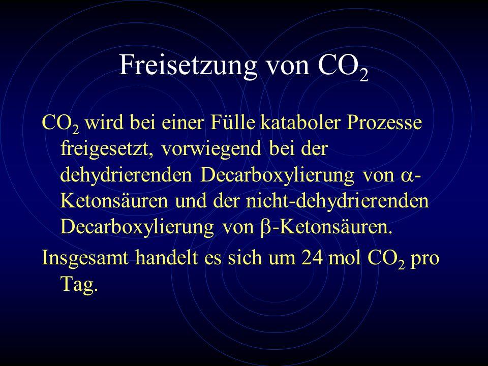 Freisetzung von CO 2 CO 2 wird bei einer Fülle kataboler Prozesse freigesetzt, vorwiegend bei der dehydrierenden Decarboxylierung von - Ketonsäuren un