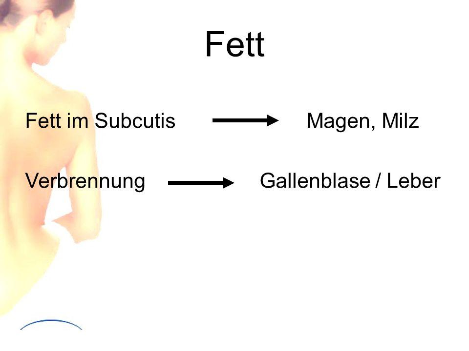 Fett Fett im SubcutisMagen, Milz VerbrennungGallenblase / Leber