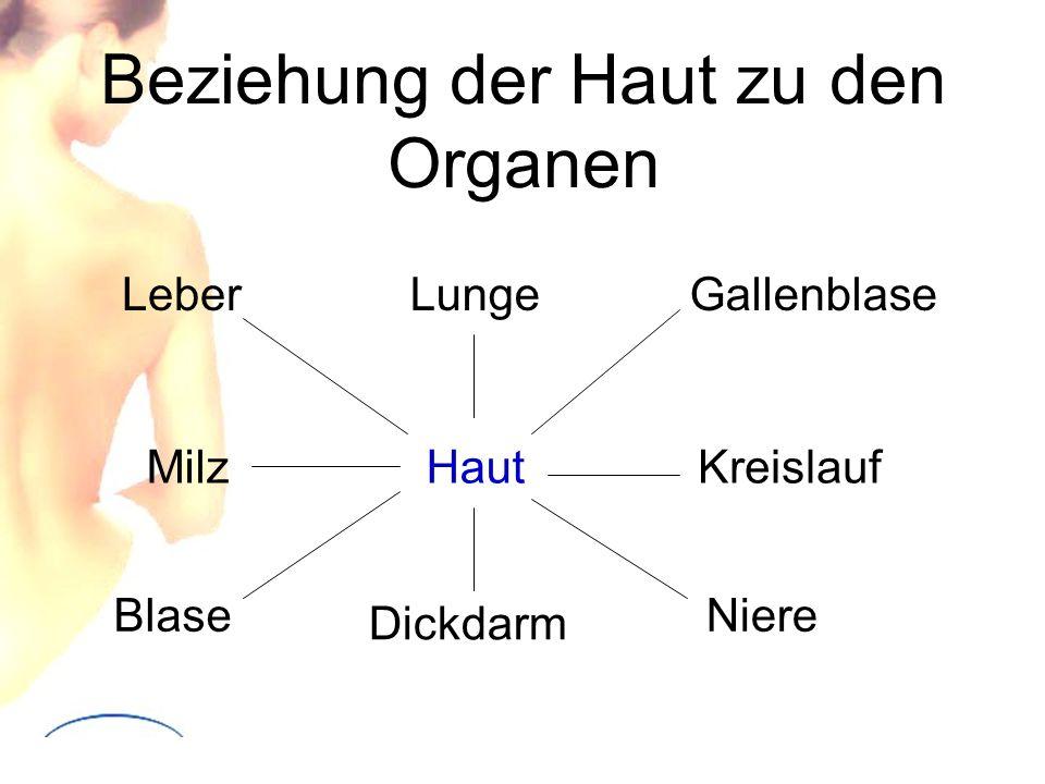 Beziehung der Haut zu den Organen Haut LungeLeber Milz Blase Dickdarm Niere Kreislauf Gallenblase