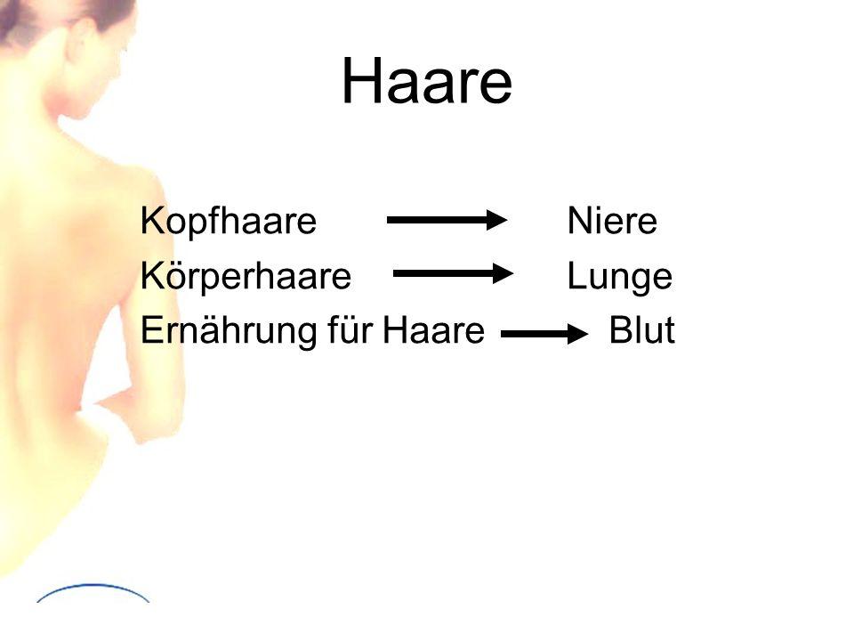 Haare KopfhaareNiere KörperhaareLunge Ernährung für Haare Blut
