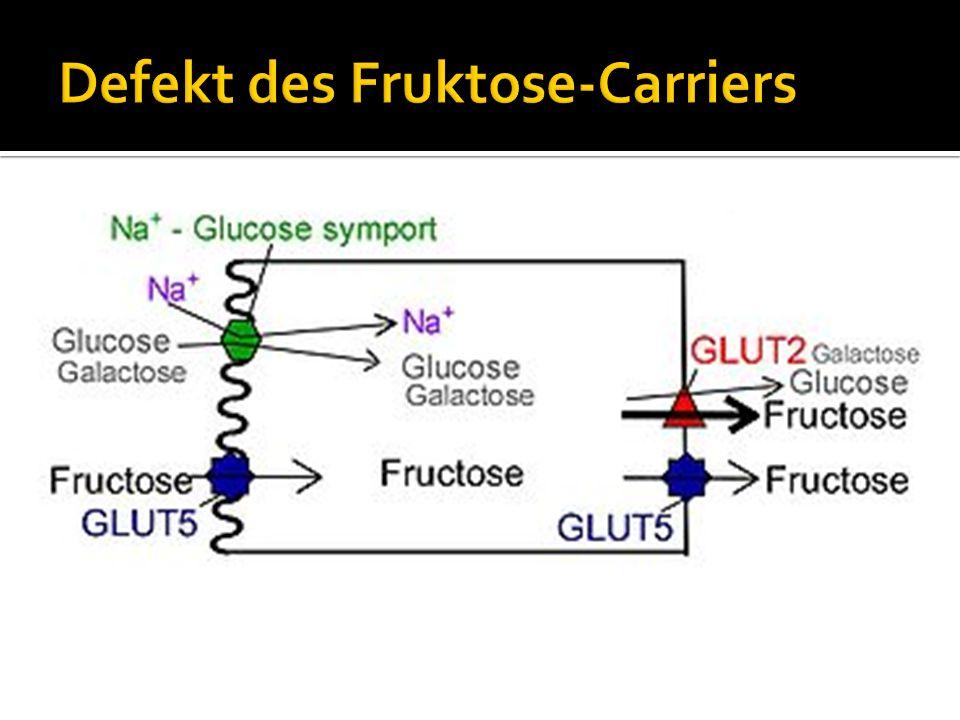 Defekt des Fruktose-Carriers
