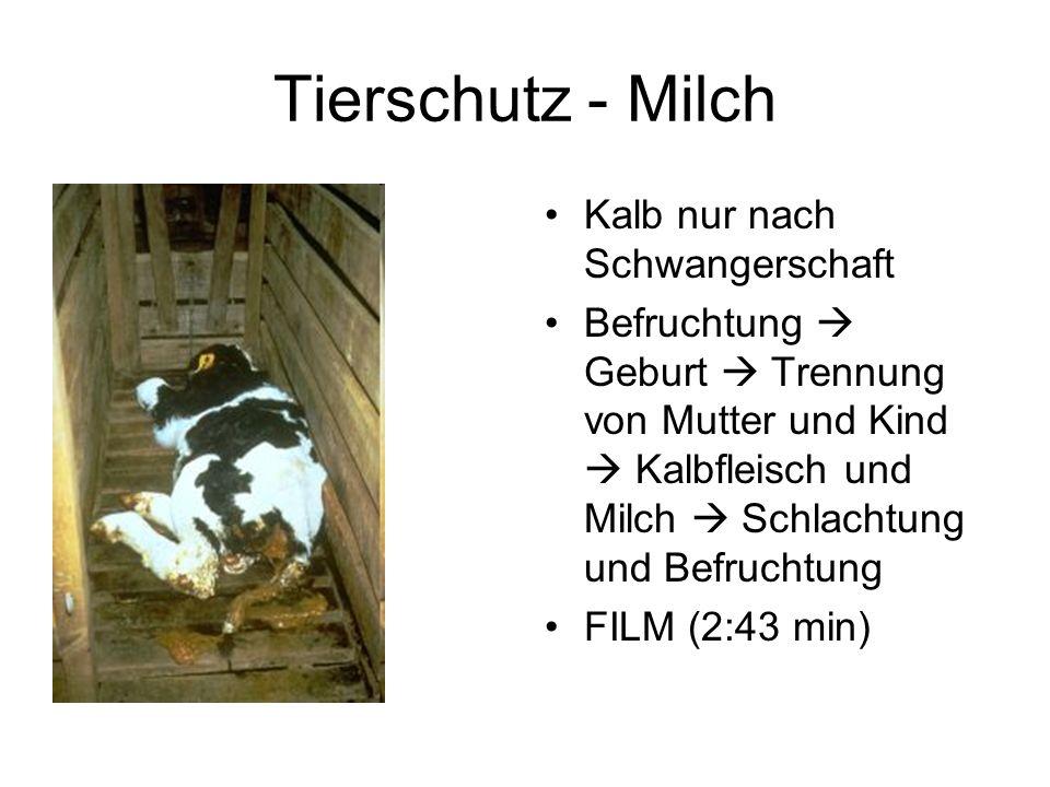 Tierschutz - Milch Kalb nur nach Schwangerschaft Befruchtung Geburt Trennung von Mutter und Kind Kalbfleisch und Milch Schlachtung und Befruchtung FILM (2:43 min)