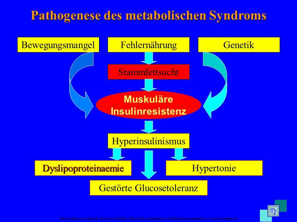 Marion Eggert, Fachärztin für Innere Medizin (Hausärztin, Akupunktur, Schilddrüsensprechstunde) www.praxis-eggert.de Muskuläre Insulinresistenz Pathog