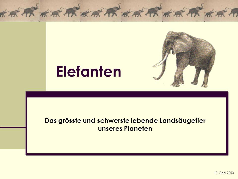 10. April 2003 Elefanten Das grösste und schwerste lebende Landsäugetier unseres Planeten