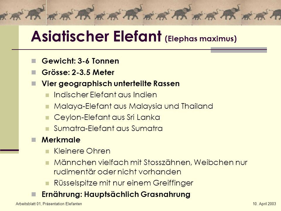 10. April 2003Arbeitsblatt 01, Präsentation Elefanten Asiatischer Elefant (Elephas maximus) Gewicht: 3-6 Tonnen Grösse: 2-3.5 Meter Vier geographisch