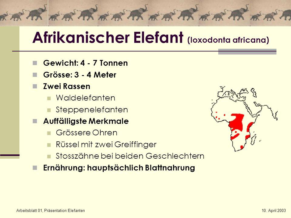 10. April 2003Arbeitsblatt 01, Präsentation Elefanten Afrikanischer Elefant (loxodonta africana) Gewicht: 4 - 7 Tonnen Grösse: 3 - 4 Meter Zwei Rassen