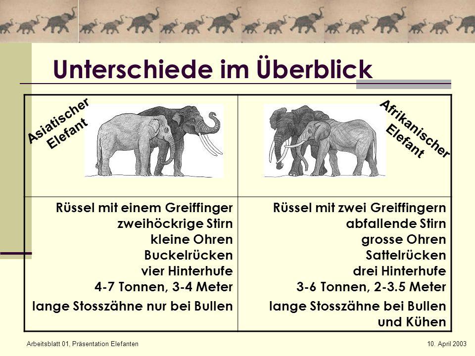 10. April 2003Arbeitsblatt 01, Präsentation Elefanten Unterschiede im Überblick Rüssel mit einem Greiffinger zweihöckrige Stirn kleine Ohren Buckelrüc