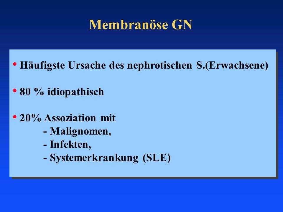 Membranöse GN Häufigste Ursache des nephrotischen S.(Erwachsene) 80 % idiopathisch 20% Assoziation mit - Malignomen, - Infekten, - Systemerkrankung (S
