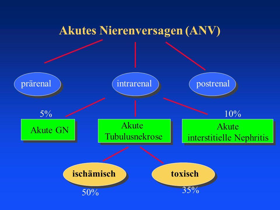 Akutes Nierenversagen (ANV) prärenalpostrenalintrarenal Akute GN Akute Tubulusnekrose Akute interstitielle Nephritis ischämischtoxisch 5%10% 50% 35%
