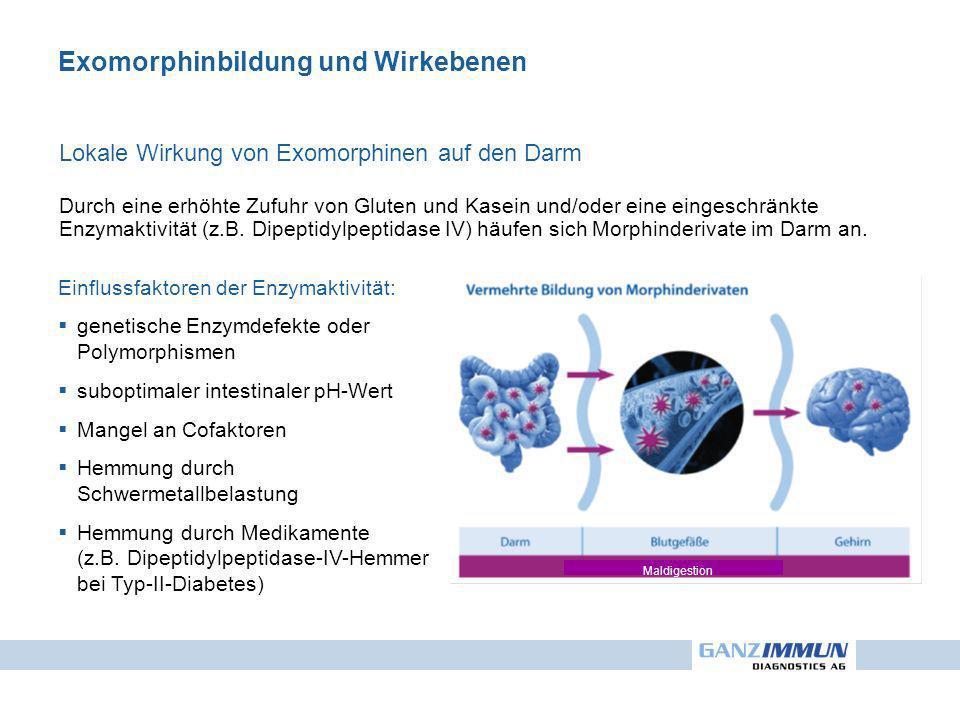 Exomorphinbildung und Wirkebenen Lokale Wirkung von Exomorphinen auf den Darm Durch eine erhöhte Zufuhr von Gluten und Kasein und/oder eine eingeschränkte Enzymaktivität (z.B.