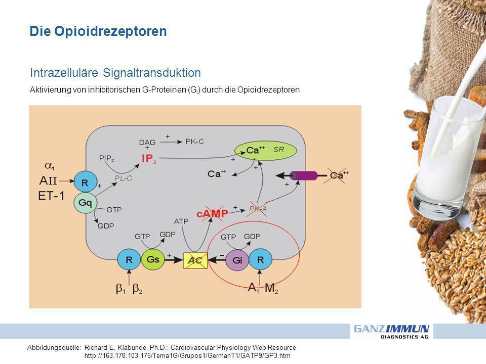 Die Opioidrezeptoren Abbildungsquelle:Richard E. Klabunde, Ph.D.: Cardiovascular Physiology Web Resource http://163.178.103.176/Tema1G/Grupos1/GermanT