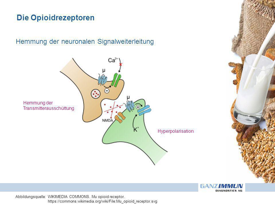 Die Opioidrezeptoren Hemmung der Transmitterausschüttung Hyperpolarisation Hemmung der neuronalen Signalweiterleitung Abbildungsquelle: WIKIMEDIA COMM