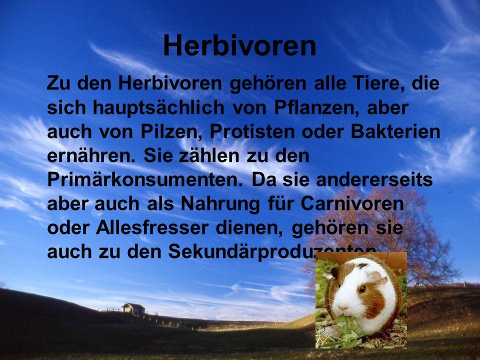 Herbivoren Zu den Herbivoren gehören alle Tiere, die sich hauptsächlich von Pflanzen, aber auch von Pilzen, Protisten oder Bakterien ernähren. Sie zäh
