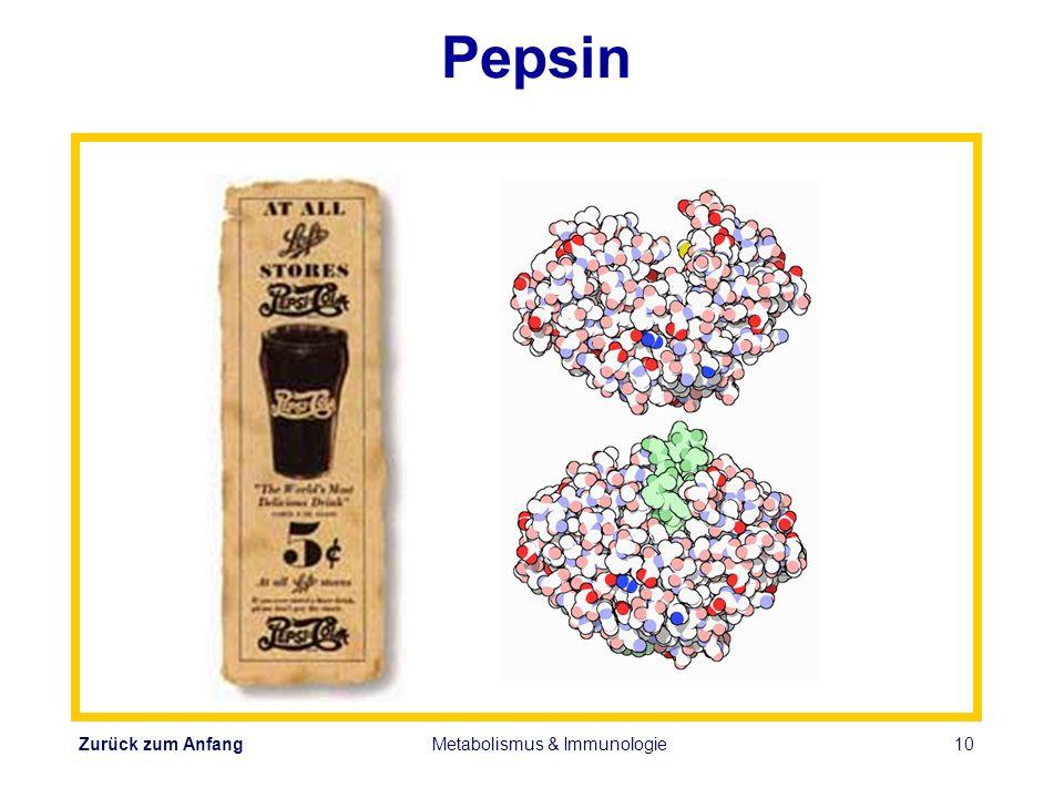 Zurück zum Anfang Metabolismus & Immunologie10 Pepsin