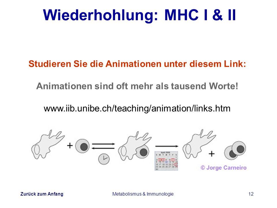 Zurück zum Anfang Metabolismus & Immunologie12 Wiederhohlung: MHC I & II Studieren Sie die Animationen unter diesem Link: Animationen sind oft mehr al