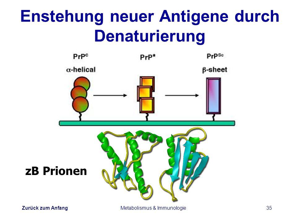 Zurück zum Anfang Metabolismus & Immunologie35 Enstehung neuer Antigene durch Denaturierung zB Prionen