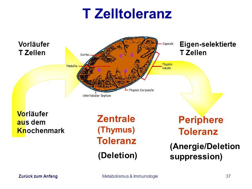 Zurück zum Anfang Metabolismus & Immunologie37 Zentrale (Thymus) Toleranz Vorläufer T Zellen Eigen-selektierte T Zellen (Anergie/Deletion suppression)