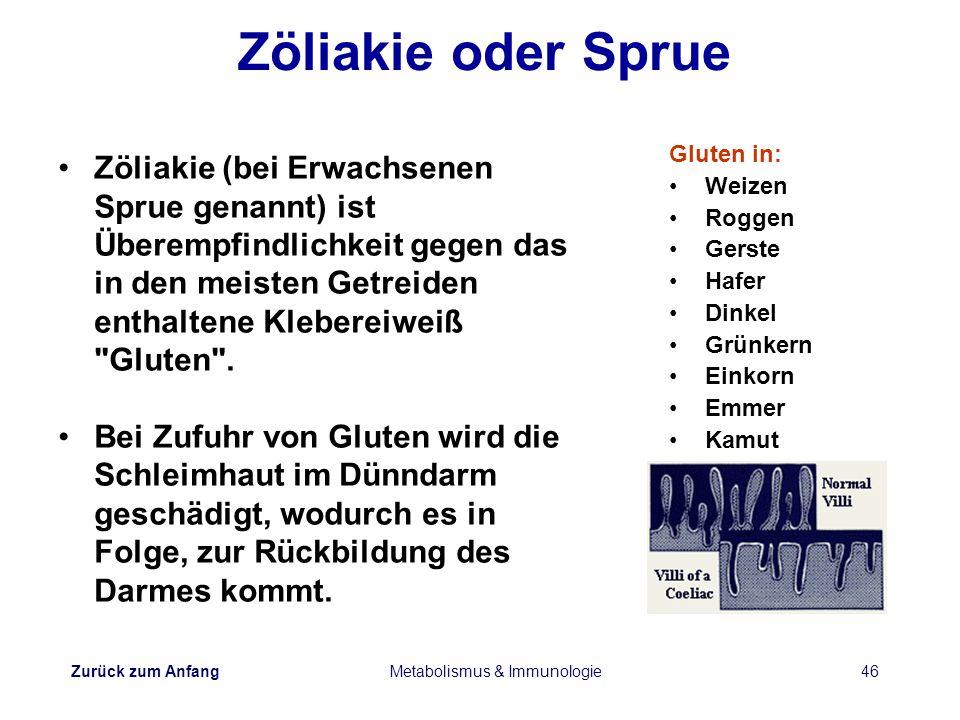 Zurück zum Anfang Metabolismus & Immunologie46 Zöliakie oder Sprue Gluten in: Weizen Roggen Gerste Hafer Dinkel Grünkern Einkorn Emmer Kamut Zöliakie