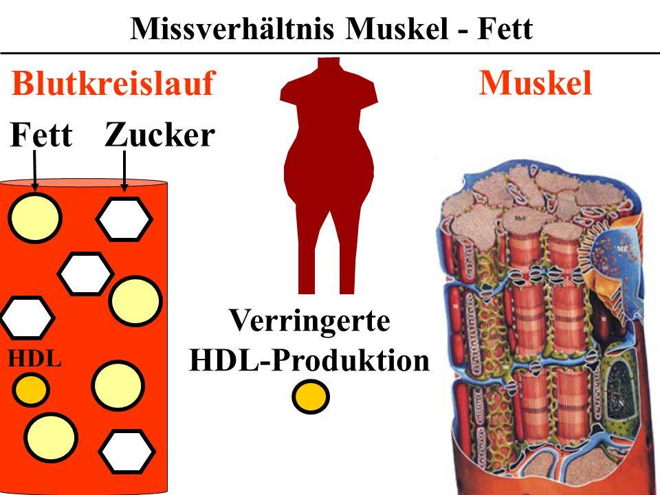Wofür ist das Cholesterin gefährlich? Fett Zucker Muskel Blutkreislauf HDL Verringerte HDL-Produktion Missverhältnis Muskel - Fett