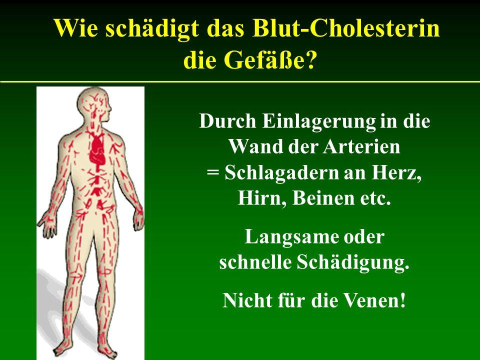 Durch Einlagerung in die Wand der Arterien = Schlagadern an Herz, Hirn, Beinen etc. Langsame oder schnelle Schädigung. Nicht für die Venen! Wie schädi