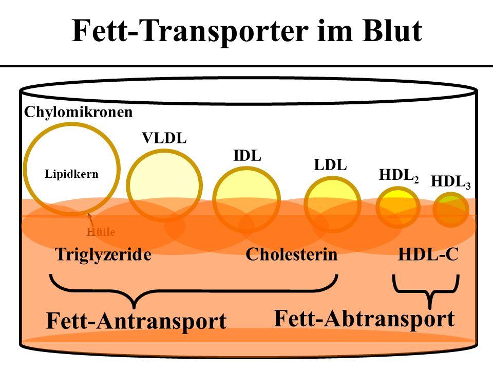 HDL 3 HDL 2 VLDL IDL LDL Chylomikronen Lipidkern Hülle Fett-Transporter im Blut Fett-Antransport TriglyzerideCholesterin Fett-Abtransport HDL-C