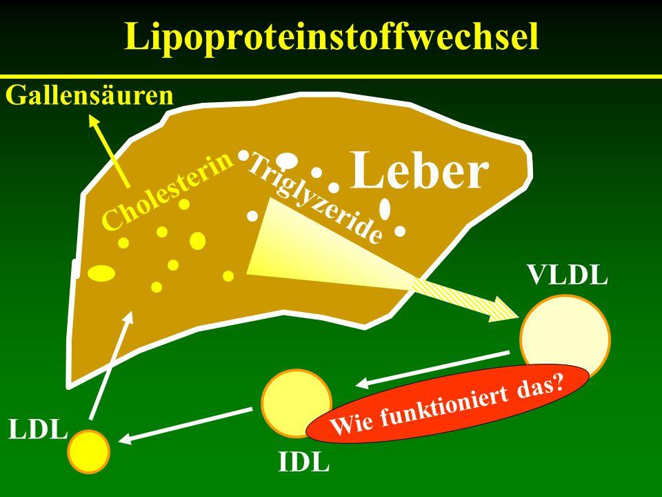 Fettabbau im Muskel VLDL IDL HDL Kapillare Endothel LPL Glyzerin FFS Muskelzelle