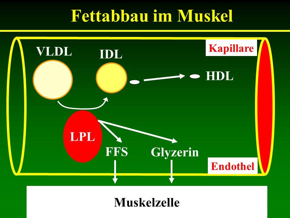 Wofür ist das Cholesterin gefährlich.Wie kommt die Energie zum Muskel.