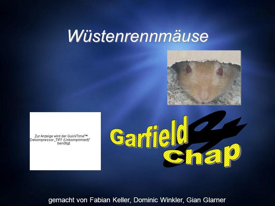 Wüstenrennmäuse gemacht von Fabian Keller, Dominic Winkler, Gian Glarner