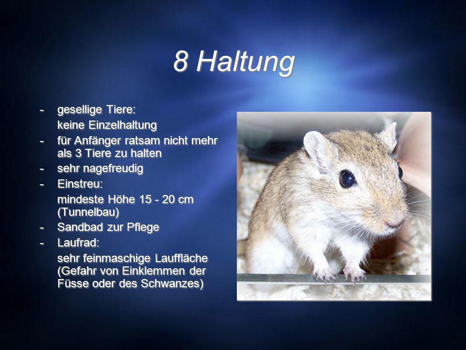 8 Haltung -gesellige Tiere: keine Einzelhaltung -für Anfänger ratsam nicht mehr als 3 Tiere zu halten -sehr nagefreudig -Einstreu: mindeste Höhe 15 -