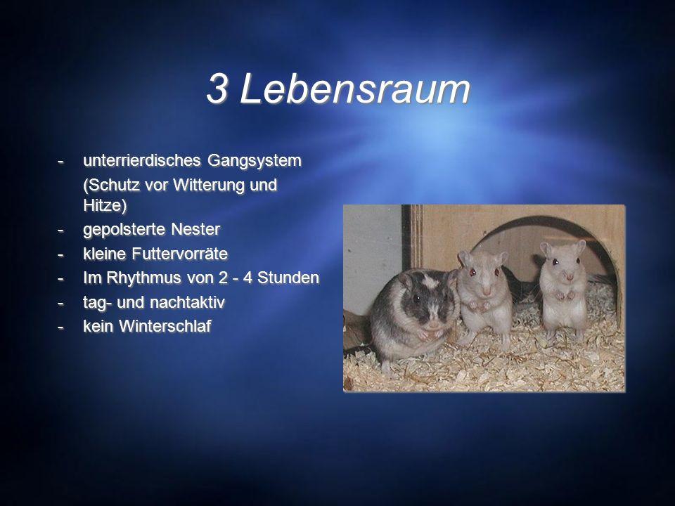 3 Lebensraum -unterrierdisches Gangsystem (Schutz vor Witterung und Hitze) -gepolsterte Nester -kleine Futtervorräte -Im Rhythmus von 2 - 4 Stunden -t