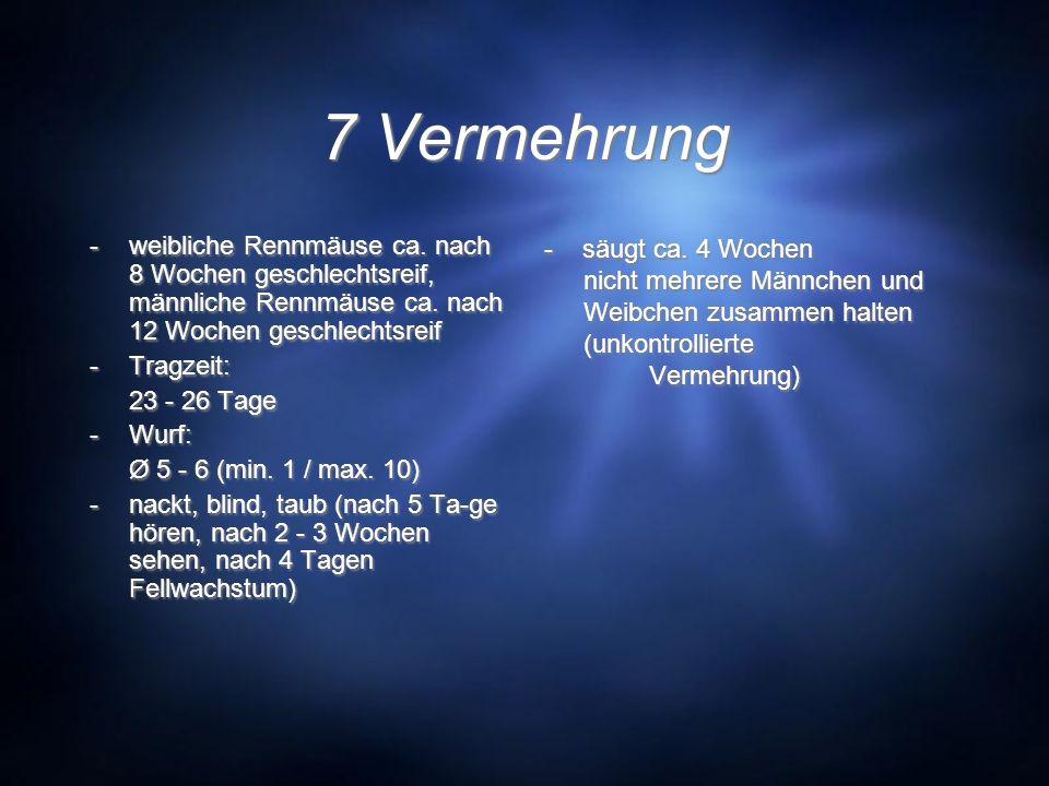 7 Vermehrung -weibliche Rennmäuse ca. nach 8 Wochen geschlechtsreif, männliche Rennmäuse ca. nach 12 Wochen geschlechtsreif -Tragzeit: 23 - 26 Tage -W