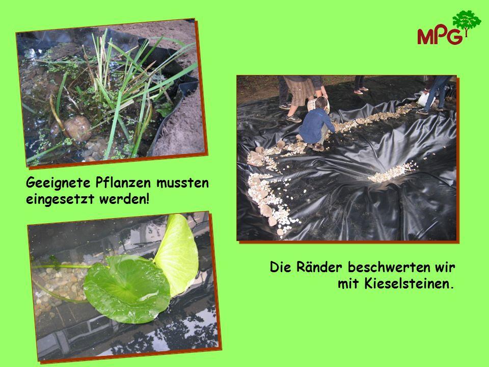 Geeignete Pflanzen mussten eingesetzt werden! Die Ränder beschwerten wir mit Kieselsteinen.