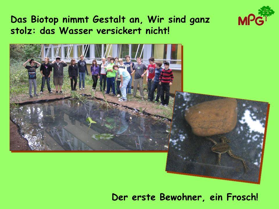 Das Biotop nimmt Gestalt an, Wir sind ganz stolz: das Wasser versickert nicht! Der erste Bewohner, ein Frosch!